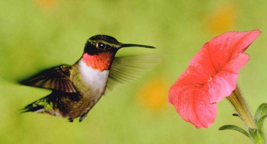 Google Hummingbird Updates